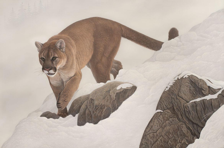 Mountain Descent original wildlife painting by Wildlife Artist Clinton Jammer